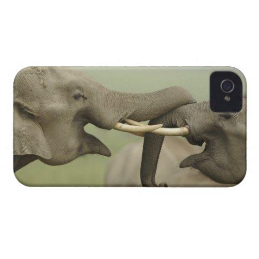 Los elefantes indios/asiáticos juegan luchar, Corb iPhone 4 Cárcasas
