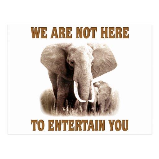 Los elefantes merecen respecto tarjeta postal