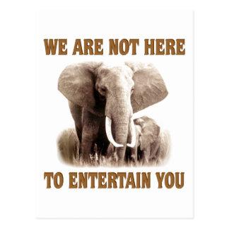 Los elefantes merecen respecto postales