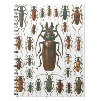Los escarabajos de los escarabajos tan muchos esc
