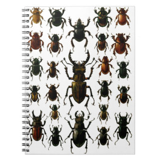 Los escarabajos escarabajos coleóptero de los es