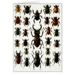 Los escarabajos, escarabajos, coleóptero de los es tarjeta