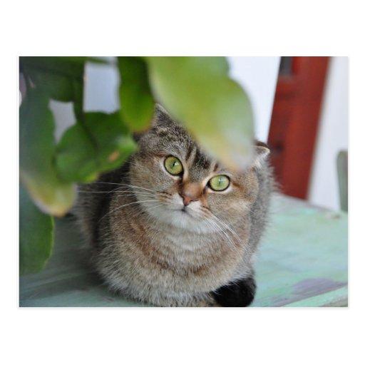 Los escoceses doblan los tallarines el gato que se tarjetas postales