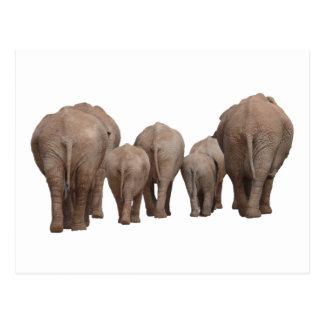 Los extremos de los elefantes - familia del tarjetas postales