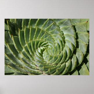Los fractales de la naturaleza póster