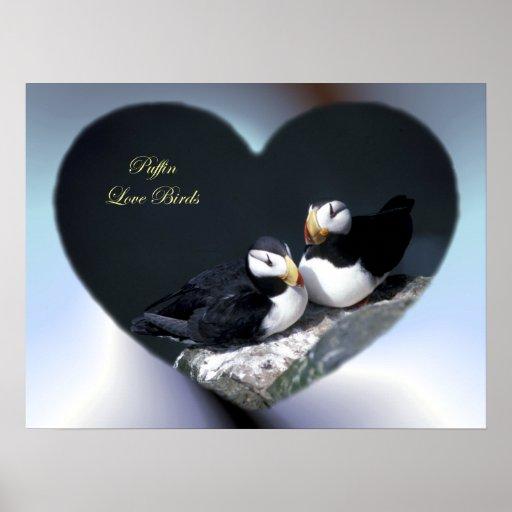 Los frailecillos de Alaska emplumaron pájaros colo Posters