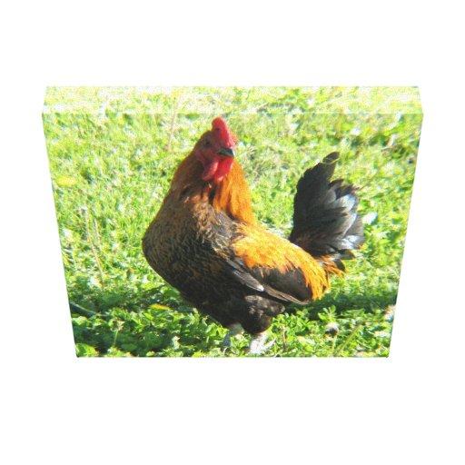 Los gallos impresiones de lienzo