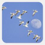 Los gansos de nieve toman vuelo en el lago NWR Pegatina Cuadrada