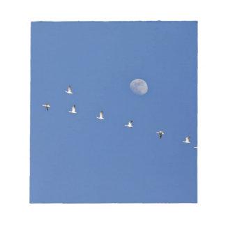 Los gansos de nieve y los gansos canadienses toman blocs de notas