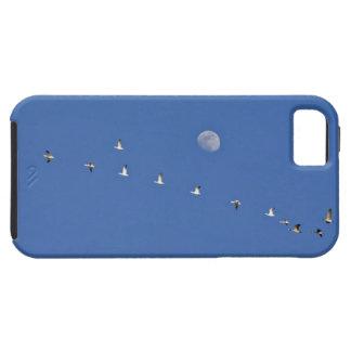 Los gansos de nieve y los gansos canadienses toman iPhone 5 carcasas