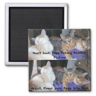 Los gatitos - aka los muchachos - imágenes diverti imán cuadrado