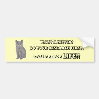 Los gatitos británicos de Shorthair son para la vi Etiqueta De Parachoque