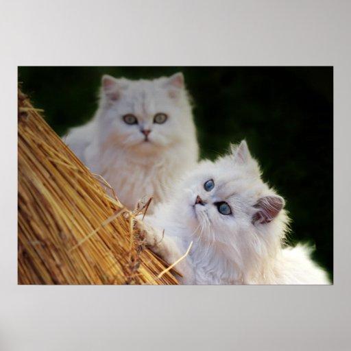 Los gatitos vienen juego posters