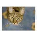 Los gatos comprensivos ayudan a aliviar el dolor s tarjetas
