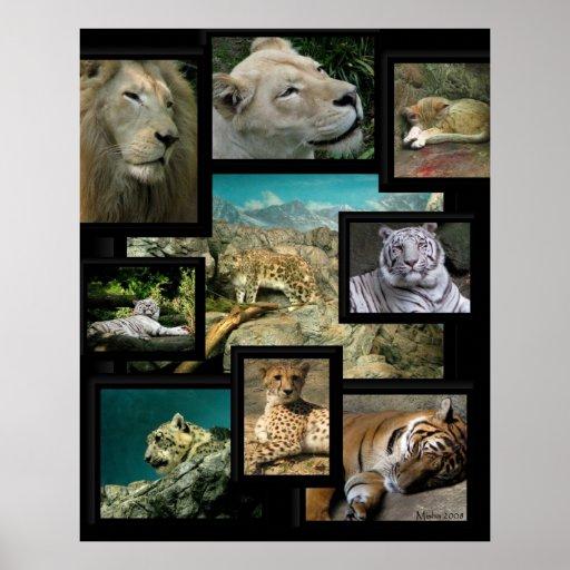 Los gatos del poster del ~ del parque zoológico de