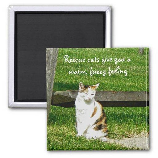Los gatos del rescate le dan un imán caliente, bor