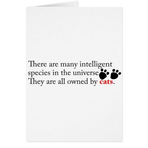 Los gatos inteligentes nos poseen tarjetón