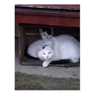 Los gatos irlandeses tardan a ShelterOn al día Postal