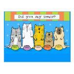 Los gatos lindos del o del manojo quieren el tarjeta postal