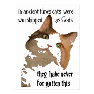 Los gatos nunca olvidan tarjeta postal