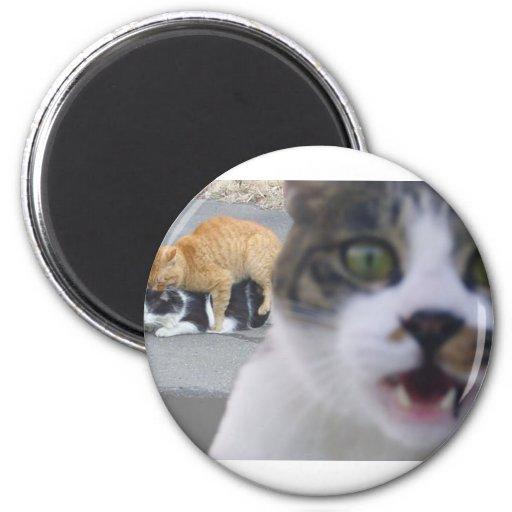 Los gatos poco secreto imán redondo 5 cm