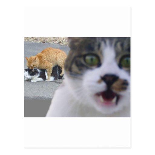 Los gatos poco secreto tarjeta postal