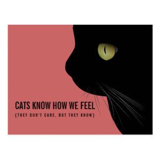 Los gatos saben sentimos la postal divertida