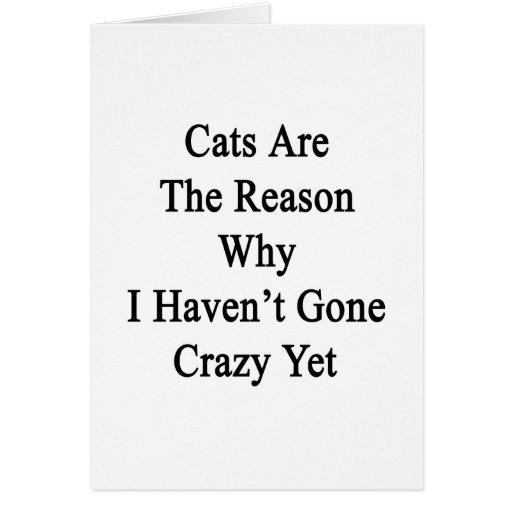 Los gatos son la razón por la que no he ido loco t felicitación