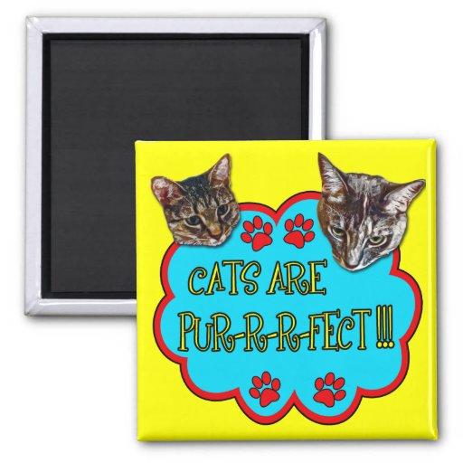Los gatos son Pur-r-r-fect Imán Para Frigorifico