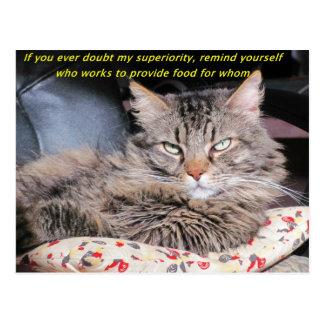Los gatos son superiores postales