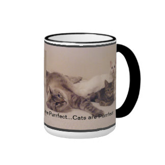 los gatos son taza del purrfect