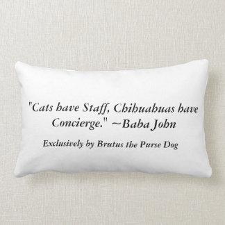 """Los """"gatos tienen el personal, chihuahuas tienen e cojines"""