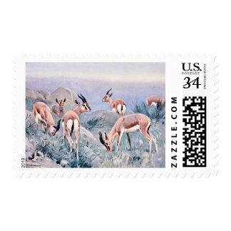 Los Gazelles de Thompson Timbres Postales