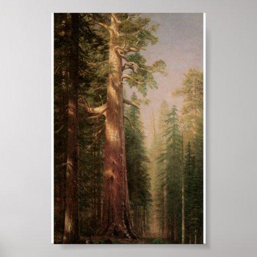 Los grandes árboles, arboleda de Mariposa, Póster