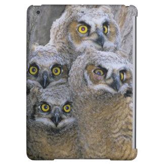 Los grandes Owlets de cuernos (virginianus del bub
