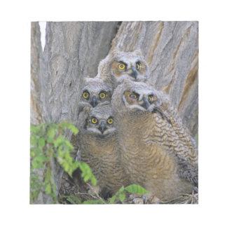Los grandes Owlets de cuernos (virginianus del bub Blocs De Notas