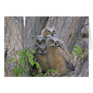 Los grandes Owlets de cuernos (virginianus del bub Tarjeta De Felicitación