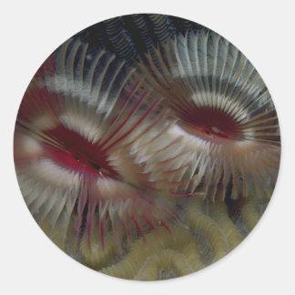Los gusanos hermosos de la fan adornan un arrecife etiquetas redondas