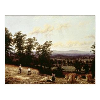 Los Haystacks acercan a un río, cerca de Harford, Tarjeta Postal