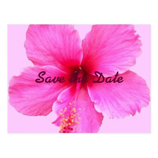 Los hibiscos, ahorran la fecha tarjetas postales