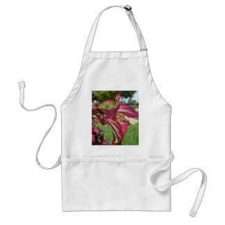 """Los hibiscos """"encienden e hielan"""" la planta delantal"""