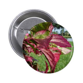 """Los hibiscos """"encienden e hielan"""" la planta pin redondo 5 cm"""