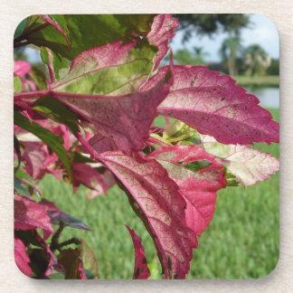 """Los hibiscos """"encienden e hielan"""" la planta posavaso"""