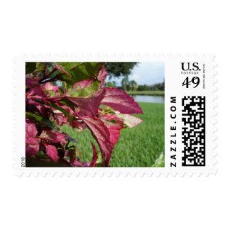 """Los hibiscos """"encienden e hielan"""" la planta timbre postal"""