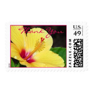 Los hibiscos le agradecen franqueo