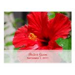 Los hibiscos rojos ahorran la postal de la fecha