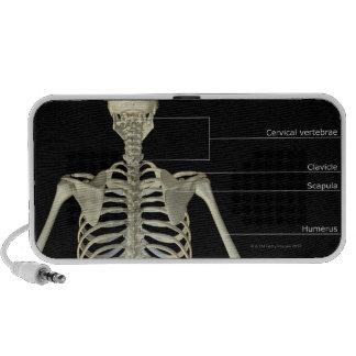 Los huesos del cuerpo superior iPhone altavoz