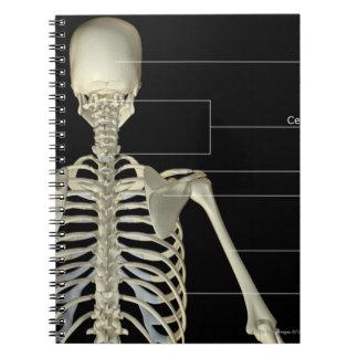 Los huesos del cuerpo superior note book