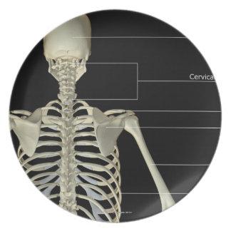 Los huesos del cuerpo superior plato de cena