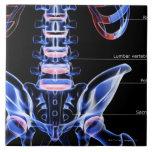 Los huesos del más de espalda azulejos